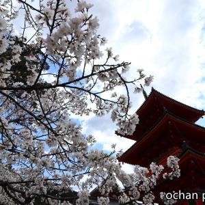 京都旅行 ふつかめ【桜咲く清水寺とグリーン車】