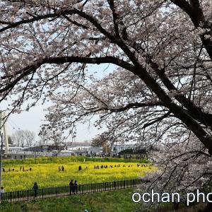 令和3年 桜の追憶【幸手権現堂公園・井の頭公園】