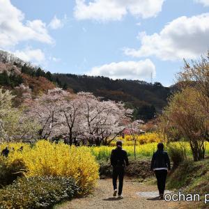 4月7日 福島中通り桜巡り【花見山・霞ヶ城・大しだれ桜】