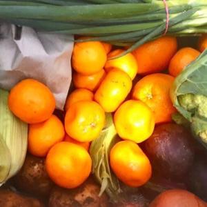 バトローのファームから取り寄せた珍しい野菜が面白い!