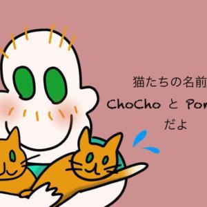 【4コマ漫画】猫を猫かわいがりするうちのパートナー