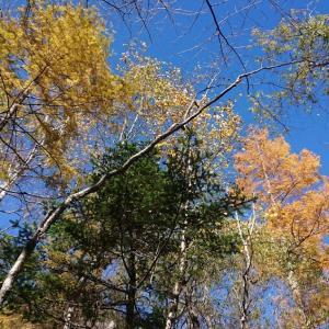 緑、黄色、オレンジ、青(@11月1日~2日)