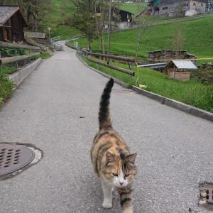 ヴェンゲンの猫