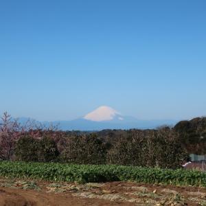 富士山!(@三浦海岸桜まつり)