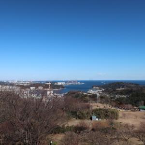 青い空と青い海(@田浦梅の里)