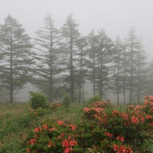 霧に包まれる(@美ヶ原)