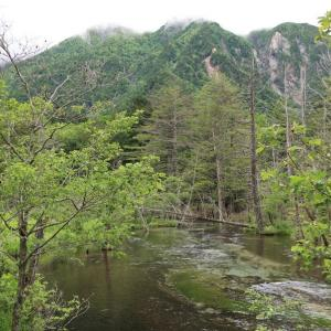 安定の岳沢湿原(@7月2日)