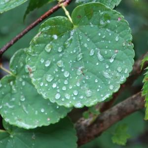 雨上がり(@9月2日~3日)
