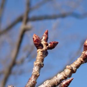 春を待つ(@十三峠~神奈川県立塚山公園)
