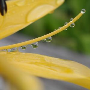 雨上がり(@7月14日~15日、尾瀬ヶ原)
