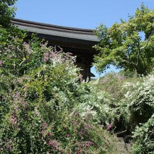 萩と花の庭(@9月23日、鎌倉/海蔵寺)