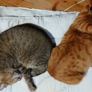 【保護猫】もうすぐお誕生日(仮)【うに】