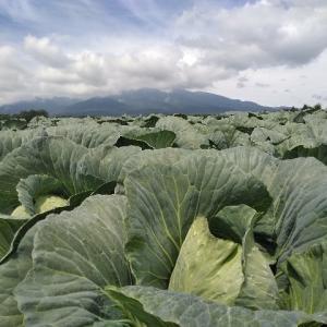 現在13種類の野菜を管理中。呼吸するが如く、野菜管理できるようになりたい。
