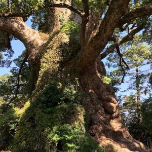 鹿児島林業研修!価値観が変化したことは間違いない!