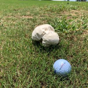 《記事ネタ》ゴルフ場のキノコ~日本が連休中の思い出