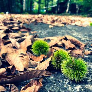 秋の足音と最後の蚊取り線香