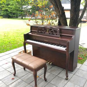 《星のエリア》誰でも弾ける森のピアノ