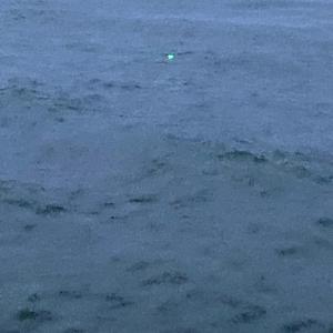 8月12日釣行  イクラを求めて…初陣!