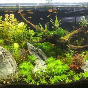 熱帯魚水槽 その1
