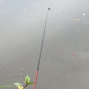 我慢のタナゴ釣り
