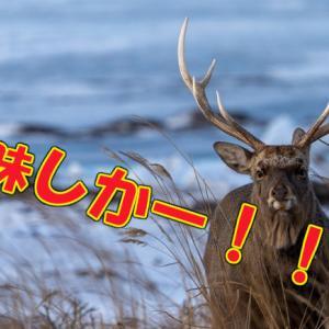 エゾシカ(蝦夷鹿)の簡単シチューと低温ロースト