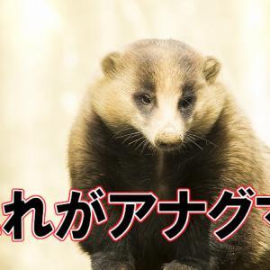 アナグマを食べる予定がニホンザルに!兵庫県神戸市のジビエ店「にくひろ」にて