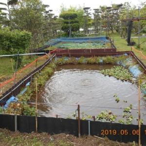 タナゴ池改修