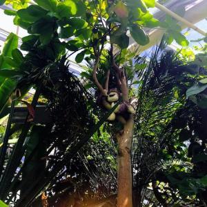 《フィンランドで熱帯植物に囲まれる》トゥルク大学の植物園に行って来た!