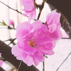 ぽかぽか春ですね♪
