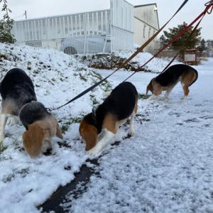 雪散歩!!
