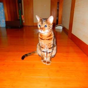 2月20日 KUUが3歳11カ月