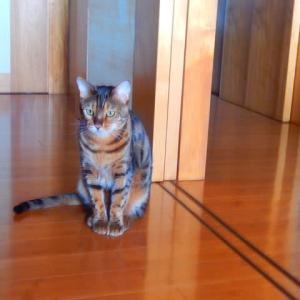 希望を言葉で要求する猫
