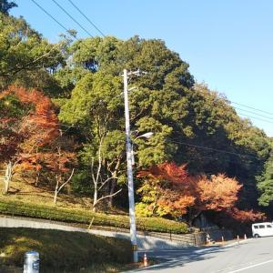 晩秋の宇和町信里関地池