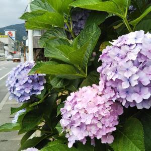 祝森子安地蔵堂の紫陽花