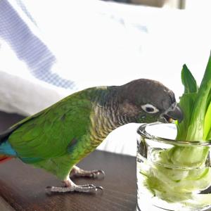 緑色の鳥 「ちりとてちん」①