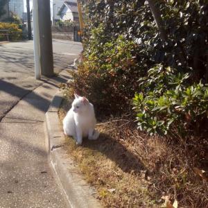 ♪猫とひとりごと㊹♪