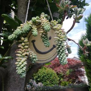 梅雨入り前にカンテ様の植え替え インコのジョリジョリ音に癒される