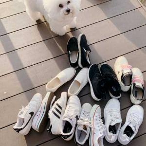 ぼくちんたちの朝時間と靴