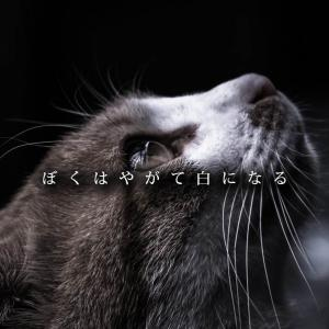 ぼくはやがて白になる ~ペットとの別れ、失くしていくもの、失くさないもの~
