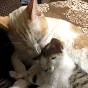【保護|ブログ】ねこさん、四階から飛びました ~ねこさん、増えました(11話)~【保護猫の多頭飼い】