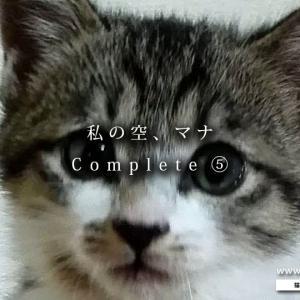 【まとめ】私の空、マナ !⑤ ~二人の未来を紡いでいこう(1/2)~【猫には猫の意志がある】