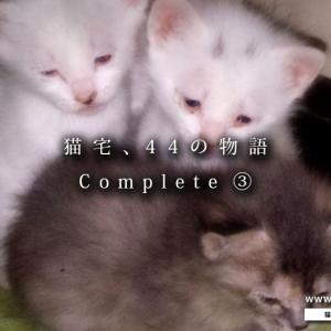 【まとめ】猫宅・44の物語 ③ ~まさかの出産ラッシュ~