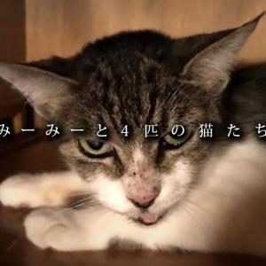 【室内野良の猫】思い出の猫たち、出会いと別れ ~みーみーと4匹の猫たち(1/3)~