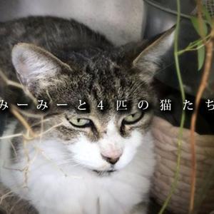 【室内野良の猫】猫同士にも相性があります ~みーみーと4匹の猫たち(2/3)~