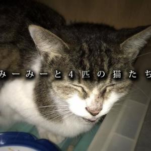 【室内野良の猫】どこまでも野良のままで ~みーみーと4匹の猫たち(3/3)~