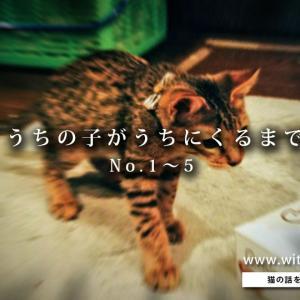 【猫を飼おう!】うちの子がうちにくるまで Complete① ~まるで昨日のことのように~
