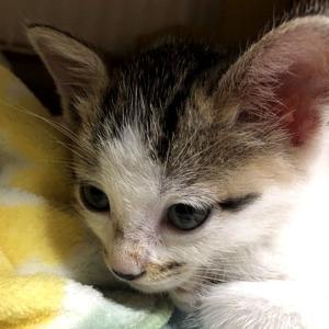 【保護|ブログ】里親さん見つかりました ~ねこさん、増えました(3話)~【保護猫の多頭飼い】