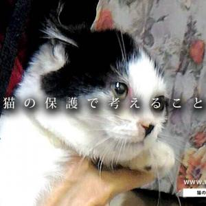 【まとめ】三毛ランジェロの保護日記:コラム編 Complete② ~猫の保護で考えること~