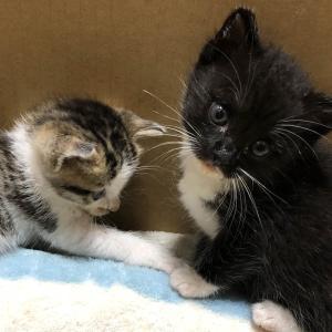 【保護|ブログ】バカじゃないの? ~ねこさん、増えました(8話)~【保護猫の多頭飼い】