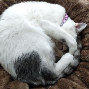 猫たちの寝相